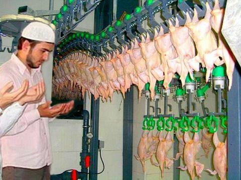 """АПХ """"Мираторг"""" запустил производство халяльной курятины в Брянской области."""